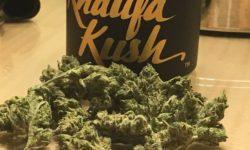 Khalifa Kush Vegas weed