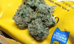 Gabriel Cannabis Washington State