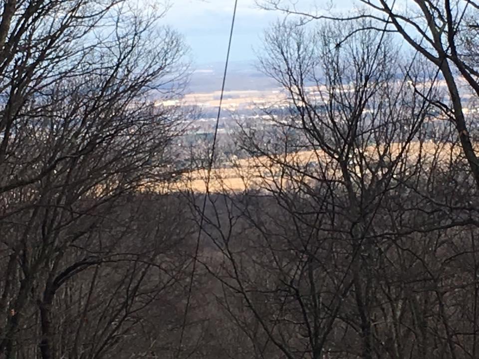 photo of lake behind trees