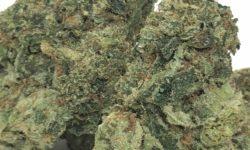 bagged buds dc high octane og weed photo