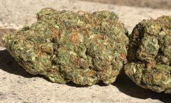 bagged buds dc blue cookies weed photo