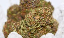 Diamond City Delivery DC Grape Pie flowers image marijuana