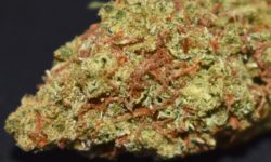 Diamond City Delivery DC StarDawg Guava flowers image weed HD