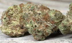 Grassroots Maryland Mambo Sauce marijuana flowers THC photography MD