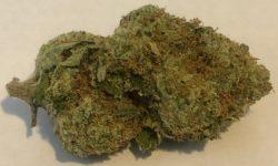 Sensi Star Flowers DC image photography weed marijuana