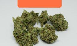 Bagged Buds DC Zkittles flowers photography HD marijuana weed