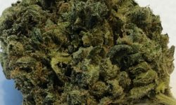 DC TeaPad Cherry Diesel flowers image photograph weed marijuana