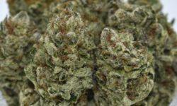 HD Purple Punch Flowers Image DC Diamond Delivery Business Local marijuana
