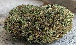 GoodSmoke420 DC Dutch Treat image photograph weed marijuana