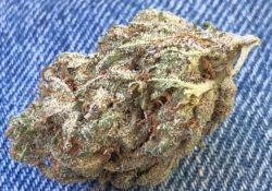 Green Label Grinders giveaway DC cookies image marijuana