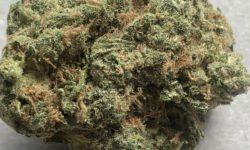 Sueno flowers image photography dc marijuana