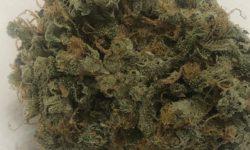 DC Teapad Trap Star image weed marijuana