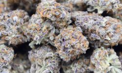 Diamon DC Delivery HQ image grape grenade flowers weed marijuana