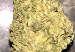 DC image photography weed marijuana AK-47 flowers