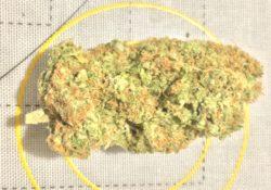 Illuminate DC Hippie Crippler Image yellow circle background marijuana