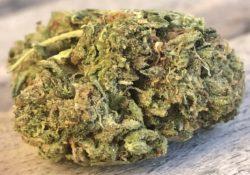 DC TeaPad Animal Cookies marijuana flowers