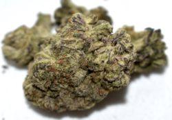 Diamond City Delivery DC Motor Breath cannabis flowers