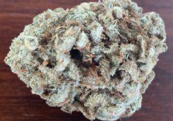 Bagged Buds DC Chocolate Diesel marijuana flowers