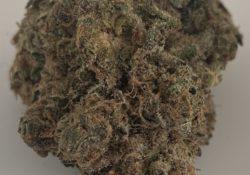 Bagged Buds DC Mint Cookies marijuana flowers