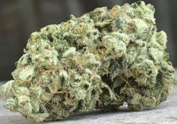 Bagged Buds DC Super Glue marijuana flowers image photography weed DC