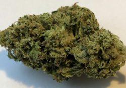 DC TeaPad Chem OG marijuana flowers Weed Image