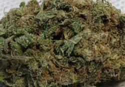 DC TeaPad Lava Cakes marijuana flowers