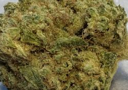 Kona weed