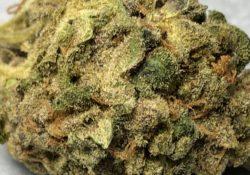 Mr. Nice x Rare Dankness weed!