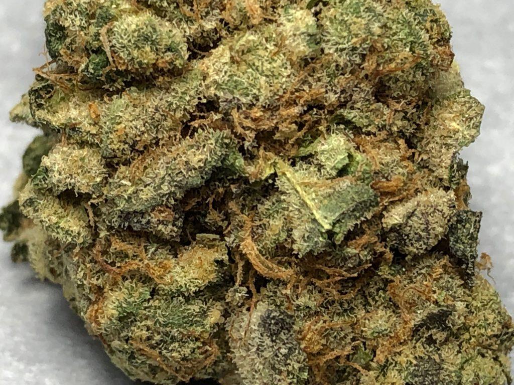 Mr. Nice x Sugar Cookies weed!