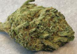 Silver Haze X Candyland Image DC photography marijuana