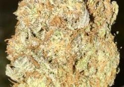 Platinum Bubba weed!