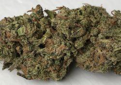 Blueberry OG weed