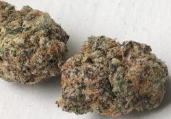 ride Purple Lambo weed