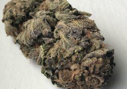 Purple Urkle weed