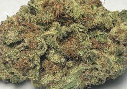 TeaPad LBS weed