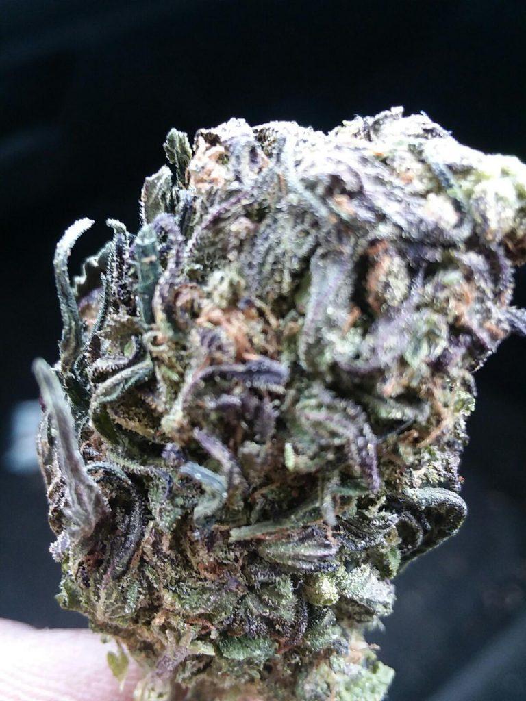 Blue Dragon Select Co Op DC weed photography