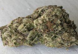 canamelo dc kush mints weed photo
