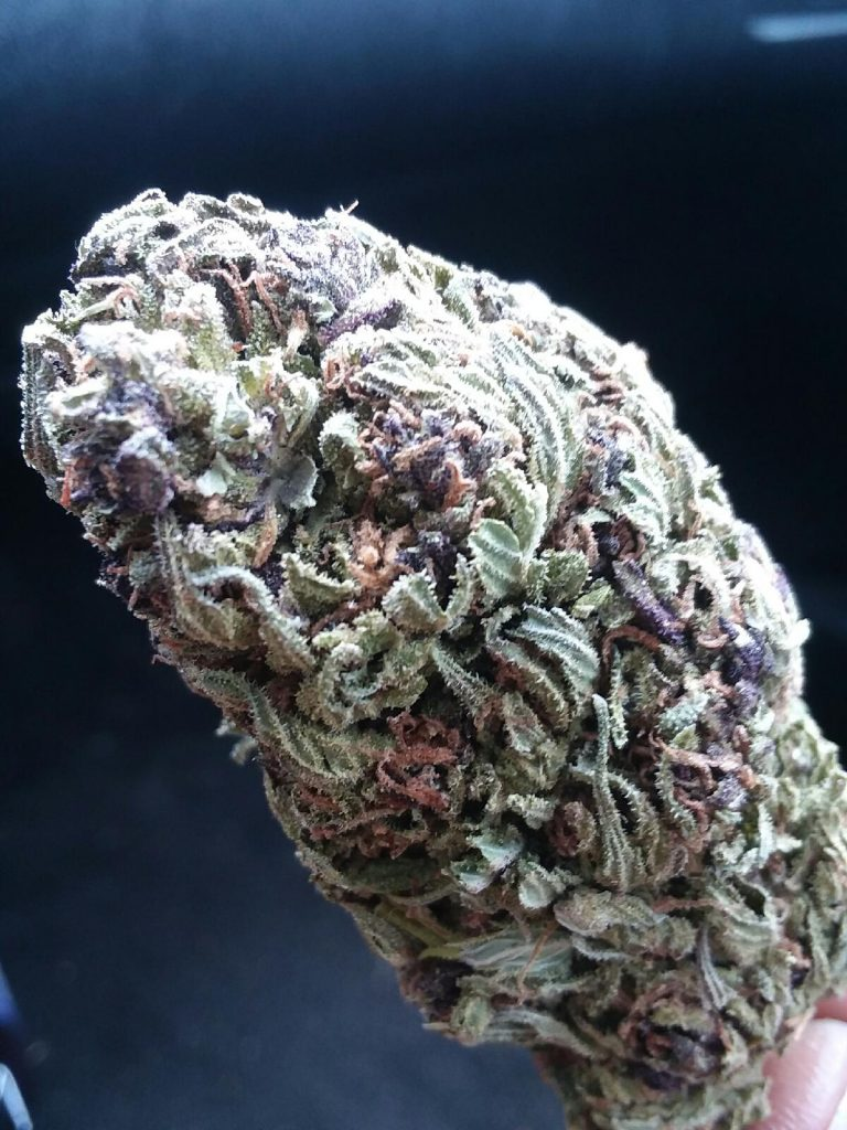 Mendo Purple Kush Monster Select Co-Op DC weed photography