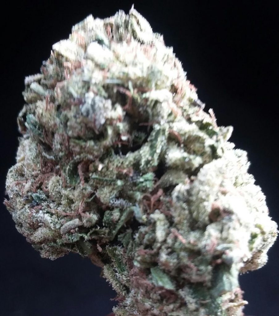 sour thai marijuana flowers dc weed photography