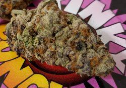 bagged buds dc purple dream weed photo