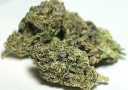 green kings dc zkittles weed photo