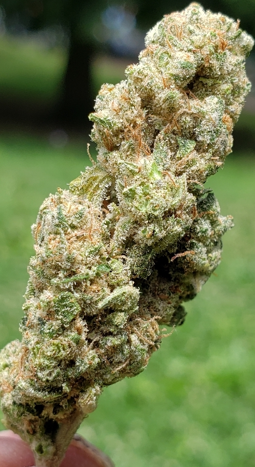 green diesel dc select co op weed photography