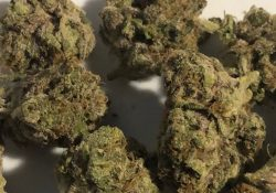 district chiefer grape topanga weed photo