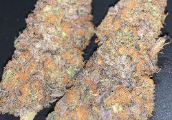 green kings dc orange sherbet weed photo
