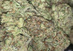green kings dc zookiews weed photo