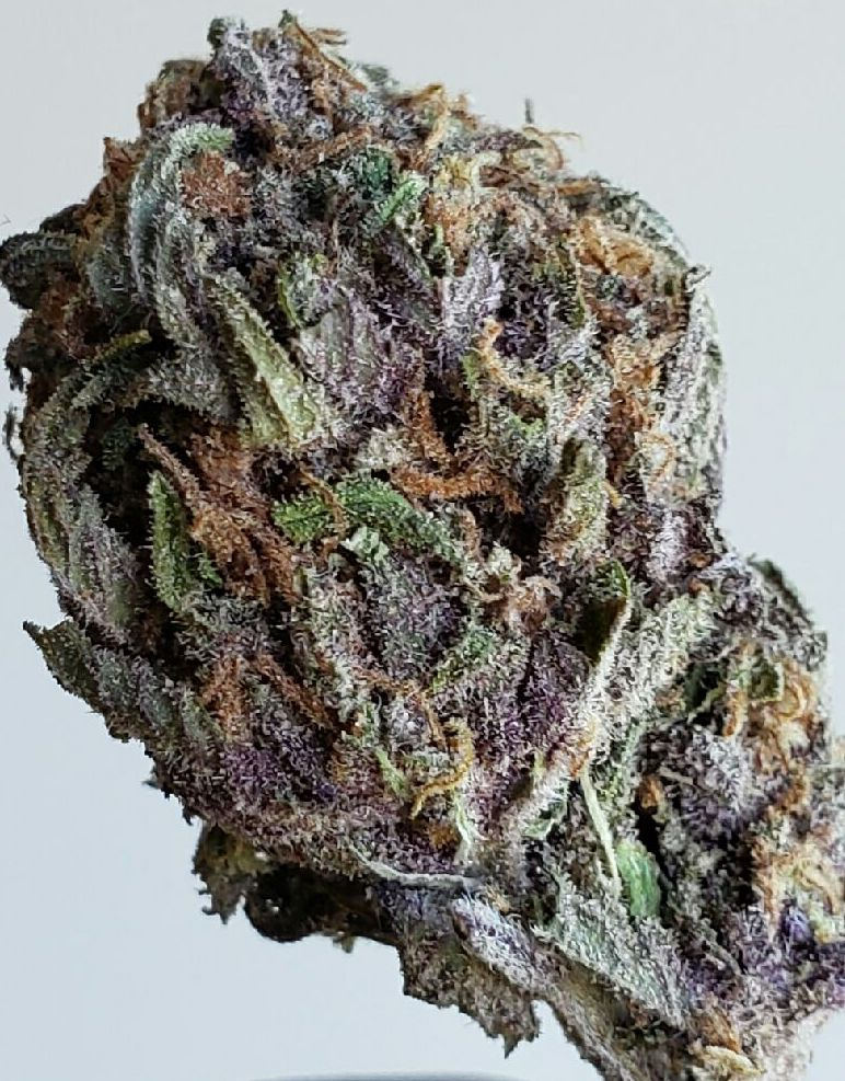 guava dc select co op weed photography