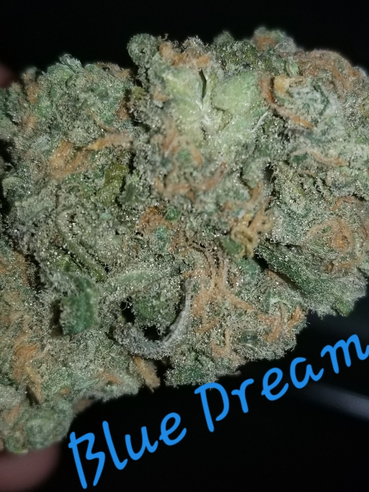 blue dream dc creative paths weed photography