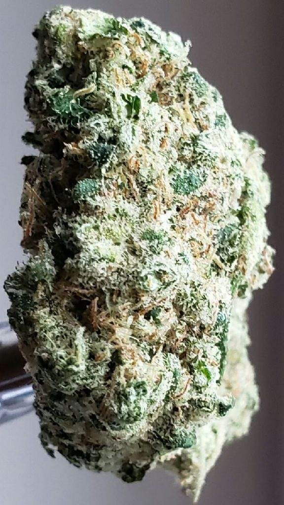 dutch treat dc select co op weed photography