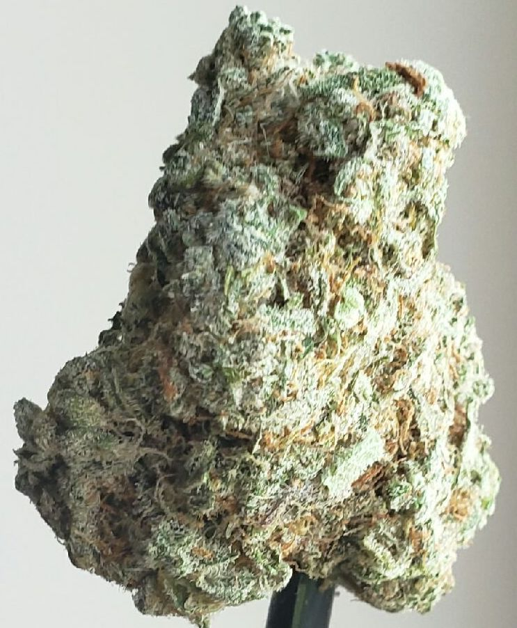 narnia dc select co op weed photography