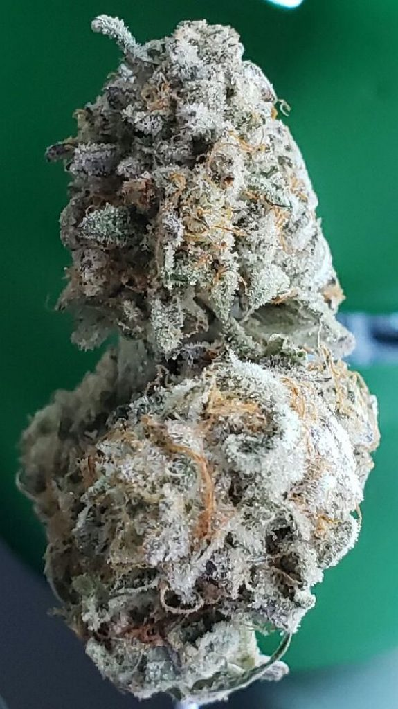 white buffalo dc select co op weed photography